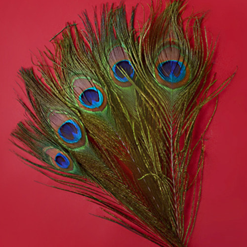 Natural Peacock Tail Eyes Feathers (공작깃털)
