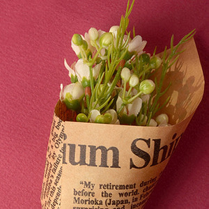 Middle Waxflower Bouquet (Cream)